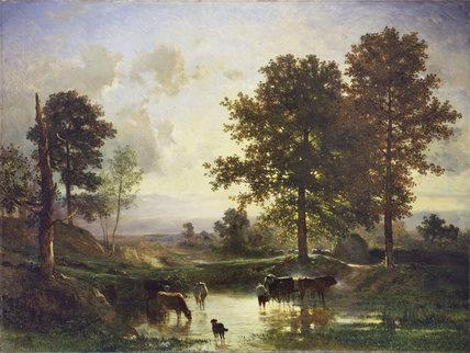 Watering Cattle