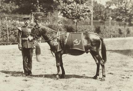 Jimson the mule, 1904