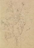 Study of Ivy on a Wall