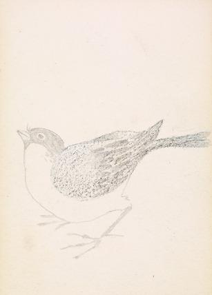 Sketchbook - Bird, Finch or Bunting