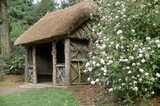 The thatched rustic summer house at Trelissick Garden framed by Viburnum burkwoodii