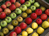 A colourful display of varieties of apples in a storage tray, at Acorn Bank
