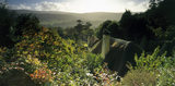 View over thatched cottage roofs at Selworthy on the Holnicote Estate with Exmoor National Park beyond