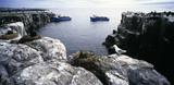 The Farne Islands, Northumberland,  with sea birds