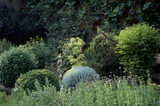 The herb border in the garden at Felbrigg Hall