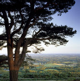 View from top of Leith Hill towards South Downs, Surrey