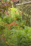 Summer planting of poppies and marigolds in a herbaceous border against a wooden fence at Hidcote Manor Garden, Gloucestershire