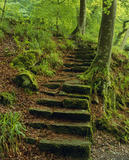 A flight of steps leading up from the River Allen into Morales Wood, an area of dense woodland along the river banks