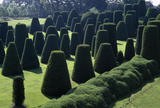The Yew Garden known as `The Sermon on the Mount' at Packwood House