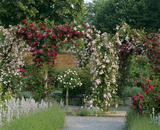 Arches of climbing roses in the rose garden at Mottisfont Abbey