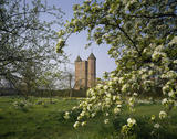 A view of the Orchard at Sissinghurst Castle Garden, looking through the branches of a blossoming tree towards the Elizabethan tower