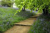 A stepped walkway through the woods at Emmetts Garden, Sevenoaks, Kent