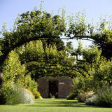 View through the pear pergola in the garden at Beningbrough Hall with the sun shining through the leaves and colourful borders spilling out onto the lawn