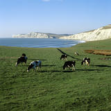Looking out from Compton Chine across the bay to Tennyson Down, West Wight