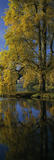 """A vertical panoramic view of """"The Pantheon"""", the largest garden building at Stourhead, taken from across the east end of the lake and through a golden-leaved """"Tulip Tree"""" in Autumn"""