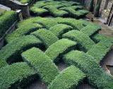 Overview of the Knot Garden at Washington Old Hall, Tyne and Wear