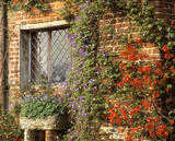 Ornamental quince and clematis growing against the inner wall of the Front Courtyard at Sissinghurst in March