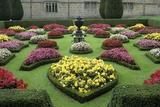 Brightly colour begonias in the formal beds at Lanhydrock