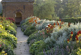 Borders on terrace walk with repeat planting of kniphofia (red hot poker) and grey foliage of senecio `Sunshine' at Packwood House
