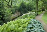 Ferns and Hostas line the stream in the garden at Dunham Massey, Cheshire