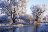 A winter scene with bare trees under a canopy of snow lit by a weak sun and the water frozen in the dyke