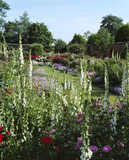 General view of walled garden at Mottisfont with white foxgloves in foreground and dianthus edged borders beyond