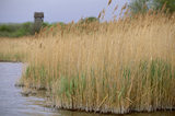 Reeds and grasses at Wicken Fen, Cambridgeshire with Tower Hide in the distance