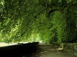 Paradise Walk, woodland adjoining the Manifold River, at Ilam Park, Derbyshire