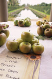 Detail of Non pareil dessert apples laid out on a table for Westbury Court's 1st Apple Day