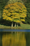View of golden trees on the banks, reflected in the Lake at Mount Stewart Garden