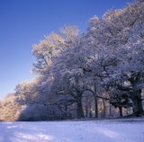 Winter scene on Box Hill, trees & ground under a blanket of snow