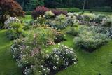 The Rose Garden at Speke Hall, Merseyside