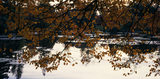 A view of a lake in Sheffield Park, seen through a lattice of bronze autumn leaves