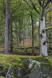Woodland area in autumn on the shores of Grasmere, Lake District, Cumbria