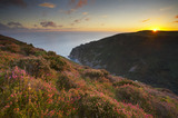 Coastal heath (Common heather, Bell heather and Western gorse) lining the coastal path in late summer on the hillside above Heddon's Mouth near Lynton, North Devon