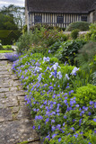 A blue border with hardy geraniums and irises at the fifteenth-century Great Chalfield Manor, Wiltshire