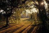 Spring sunlight streaming through trees at Bodnant Garden casting strong shadows on grass below