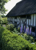 The front of Alfriston Clergy House with purple delphiniums and hedge in the foreground
