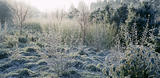 Plants covered in frost on the Winter Walk at Anglesey Abbey