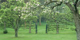 View of the Orchards at The Courts Garden