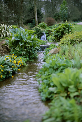 Medium view of the stream with moisture loving plants beside it, a waterfall above, and trees in the background at Trengwainton