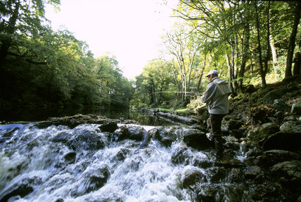 Man fly fishing on the River Teign, amongst the boulders, rocks and rushing foaming wate, on the Castle Drogo Estate, Devon