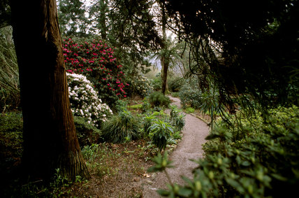 The Dell at Trelissick with a path lined with tree ferns, rhododendrons and echiums