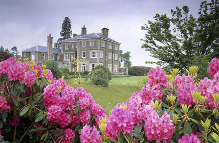 Close view of pink rhododendrons in the North Garden at Emmetts in front of an oblique view of the whole house