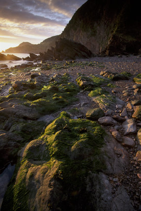 A view along the beach showing the large rocks covered in seaweed at Woody Bay