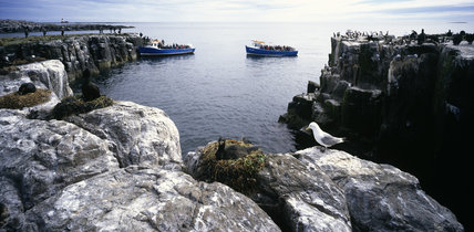 The Farne Islands, Northumberland,  with sea birds