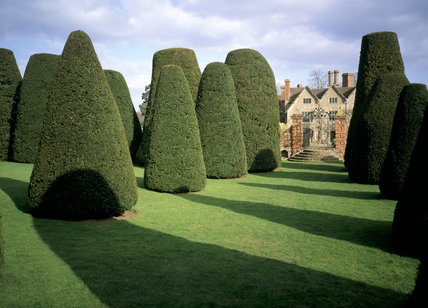 The topiary yew collection at Packwood House, Warwickshire