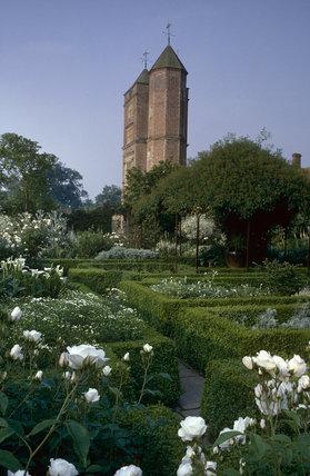 White Garden with Rosa