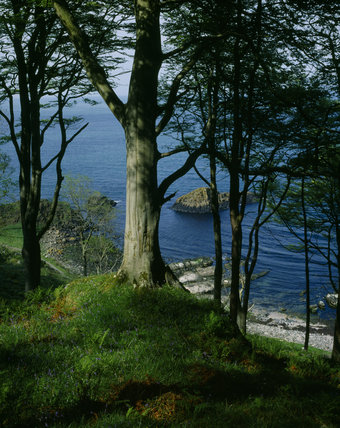 Wooded cliffs, trees and deep blue sea at Murlough Bay, Co Antrim, Northern Ireland