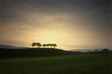 Dawn trees on Holnicote Estate, Somerset
